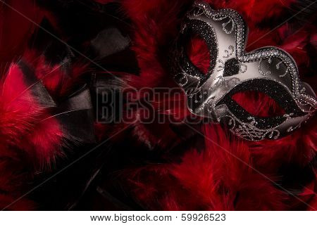 Mardi Gras Mask On Feathers