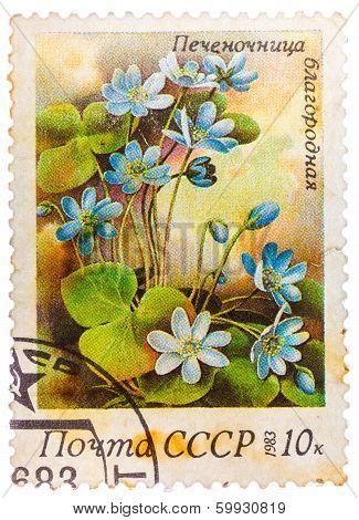 Stamp Printed In Ussr (cccp, Soviet Union) Shows Anemone Hepatica (liverwort, Kidneywort Or Pennywor