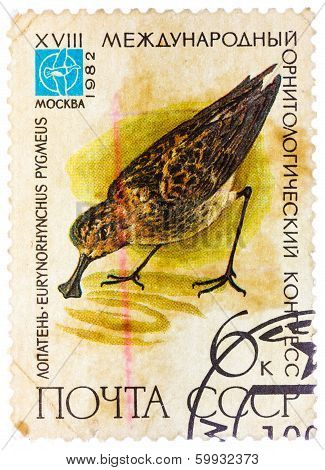 Stamp Printed In Ussr (russia) Shows A Bird Eurynorhynchus Pygmeus