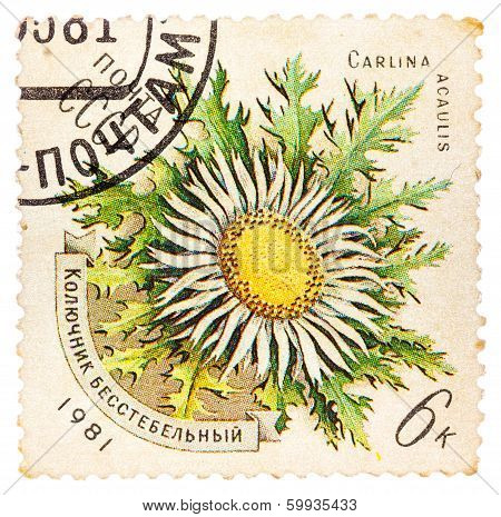 Stamp Printed In Ussr Shows A Carlina Acaulis