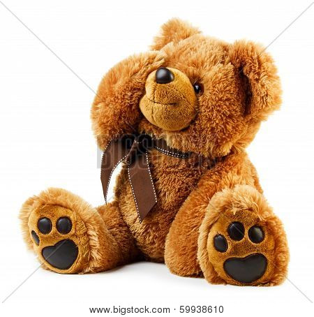 Toy Teddy Bear