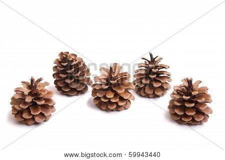 Five Fir Cones
