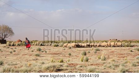 Old Woman Shepherd and flock of sheep in Bolivia