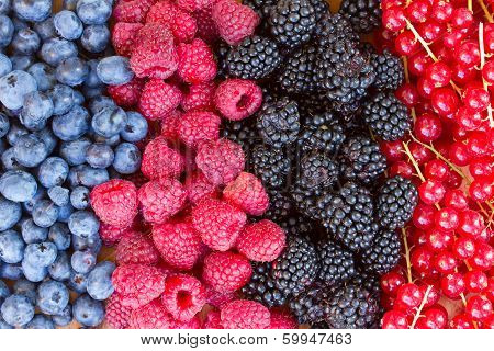 rows of  fresh berries on table