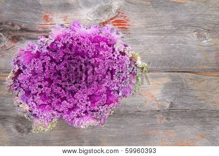 Purple Kale On Rustic Wooden Table