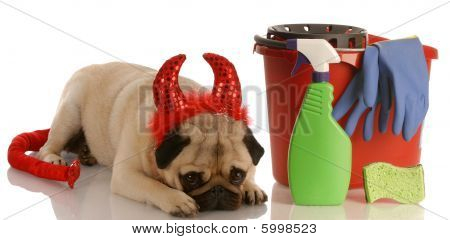 Pug Devil With Bucket