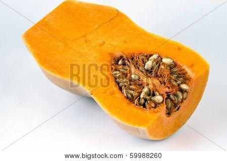 Butternut Squash (cucurbita Moschata)
