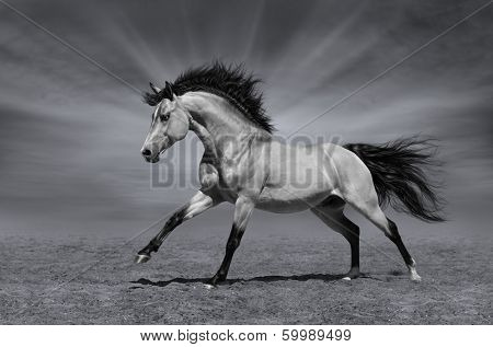 Chestnut horse in motion - black-and-white photo