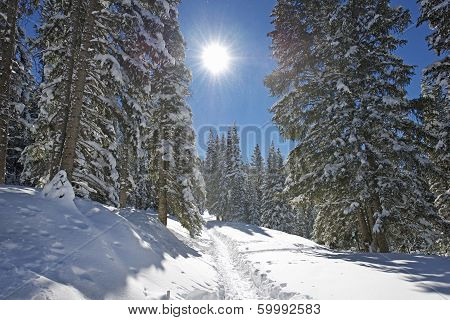 Winter Mountain Trail
