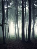 stock photo of trough  - Vertical photo of dark mysterious forest with fog trough trees - JPG