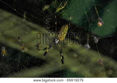 Golden Orb Spider In Corcovado National Park, Costa Rica