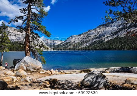 Gorgeous Yosemite National Park, California, Usa