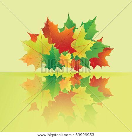 Autumn wet maple leaves.