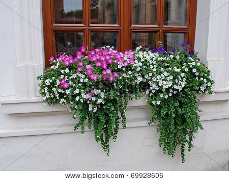 Flowers on a windowsill