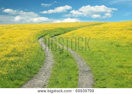 Curved Way In A Buttercup Meadow Against Blue Sky With Clouds