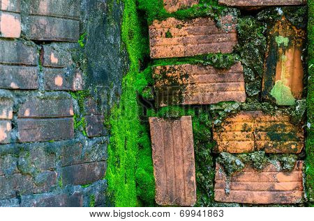 Red brick wall and green mossy