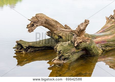 Tree Trunk In Water