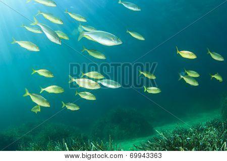 Fish shoal underwater