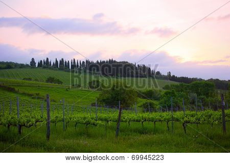 Early morning over vineyards Tuscany