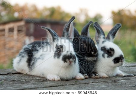 Three Little Rabbit Sitting On A Wooden Table In The Garden