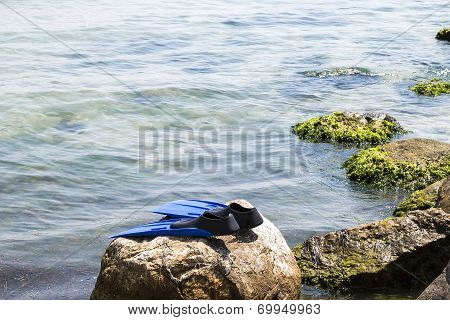 Seascape with flippers