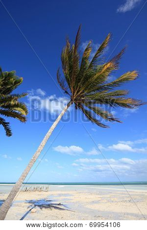 Windy Beach In Cuba