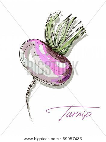 Vector hand drawing realistic juicy turnip