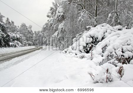 Winter snow and a road going through forest
