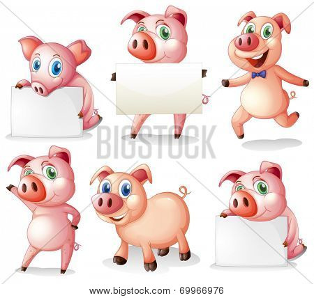 Illustration of the pigs with empty signboards on a white background
