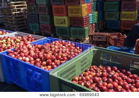 Products Of Agricultural Cooperative Of Naoussa, Greece, Stacked In Crates. The Famous