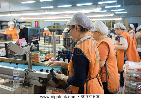 Women Working At The Factory Of Agricultural Cooperative Of Naoussa, Greece. The Famous
