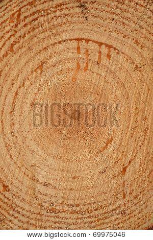 Endgrain On Log