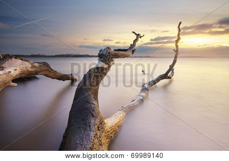 Snag on the shore. Beautiful nature composition.