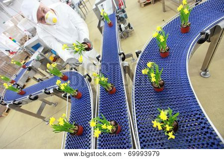 specialist working with flowers on conveyor belt,contemporary business