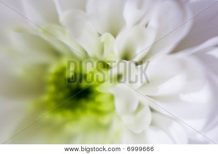 Soft Focus Green and White Flower Macro / Close Up