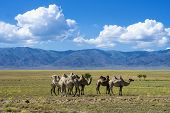 pic of steppes  - Landscape in Asia with camels against mountains and dry steppe - JPG