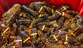 image of lobster boat  - Fresh live New England lobsters just off the boat - JPG