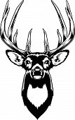 image of antlers  - Vector Illustration of a Whitetail Deer Head - JPG