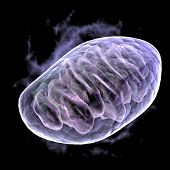 stock photo of mitochondria  - a computer graphic rendering of a mitochondria - JPG