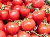 picture of plum tomato  - The beautiful red tomatoes on bazaar in Tel Aviv Israel - JPG