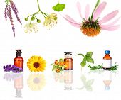 pic of mixture  - Collage of medicine bottle and herbs - JPG