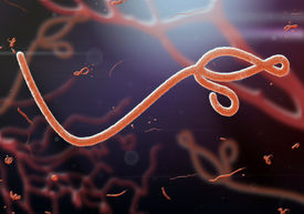 pic of microscopic  - A Microscopic view of the Ebola virus - JPG