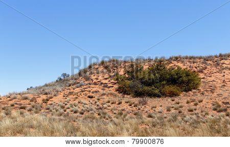 Plains Of The Kgalagadi Transfrontier Park