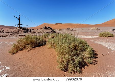 Sossusvlei Beautiful Landscape Of Death Valley, Namibia