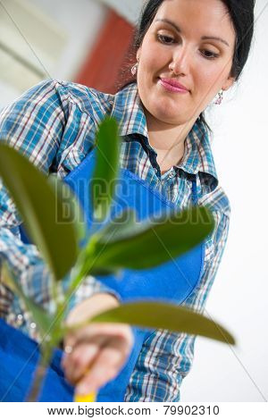 Woman looking after houseplant at home