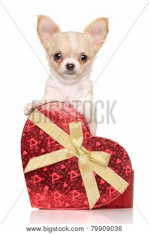 Chihuahua Puppy With Red Heart