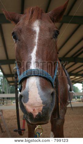 Horse nose