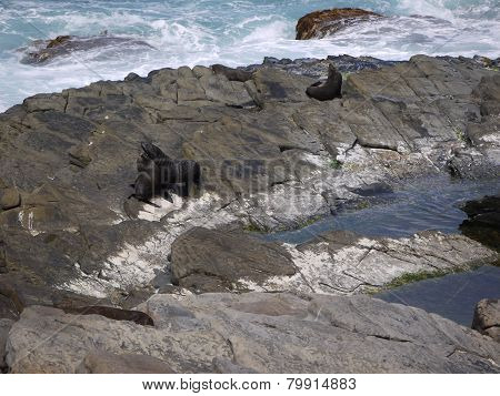 Fur seals on the rocks