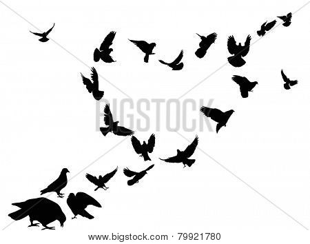 illustration with heart from pigeon silhouettes isolated on white background