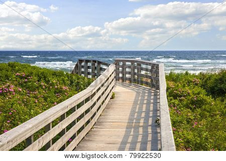 Wooden walkway leading to Atlantic ocean beach with wild rose flowers in Prince Edward Island, Canada.